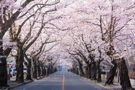 「福島県夜の森」の画像検索結果
