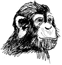Dessin Coloriage Animal Tete De Singe Chimpanze Education