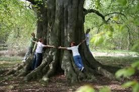 forest conservation essay  forest conservation essay