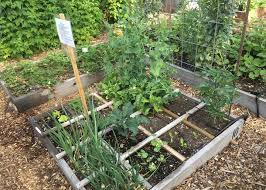 raised garden bed photo by oregon state university wikimedia commons
