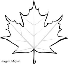 Small Picture Maple Leaf Coloring Pages Maple Leaves 18448 Bestofcoloringcom