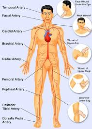 Human Body Pressure Points
