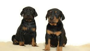 two sweet puppies image by lars christensen from fotolia