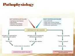 Pathophysiology Of Chf Pathophysiology Of Congestive Heart Failure