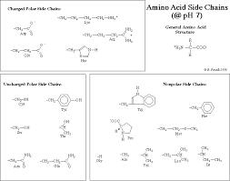 Amino Acid Chart Inspiration Ch44Lec44