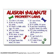 Alaskan Malamute Weight Chart Alaskan Malamute Jokes Soda Cube