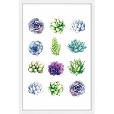 Mistana Succulent Chart Framed Painting Print Size 30 H X 20