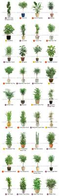 perfect office plants. Large Indoor Plants For Interior Landscaping By Plantscape Inc. Perfect Office E