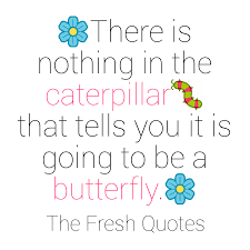 Butterfly Quotes Mesmerizing A Caterpillar Becomes Butterfly Quote