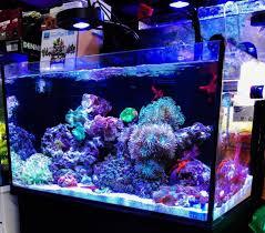 Kessil Aquarium Light Kessil A80 Review Tuna Blue Led Light With Mini Gooseneck
