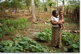 Small Picture Garden Design Courses In Sri Lanka izvipicom