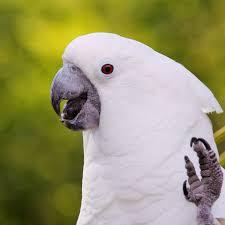 8 Top Loudest Parrots Often Kept As Pets