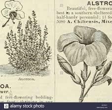 seeds catalogs nursery stock catalogs gardening catalogs flowers seeds catalogs agrostemma alonsoa mask flower i handsome brilliant colored