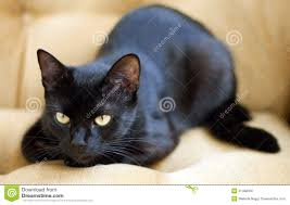 cute black cats with yellow eyes.  Cute Cute Black Cat Images To Cats With Yellow Eyes E