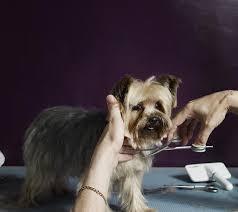 Skills Of Successful Dog Groomers