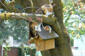 grey squirrel house plans beautiful safe bird house design tips keep nests safe