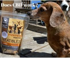 how does cbd work for dogs