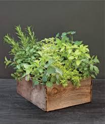 how to make an indoor herb garden