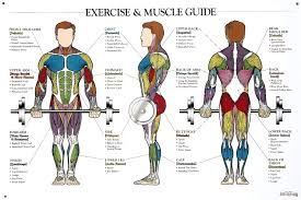 Pin By M E Adha On Workout Muscle Anatomy Exercise