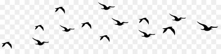 flying bird black and white clipart. Wonderful Flying Bird Flight Clip Art  To Flying Black And White Clipart F