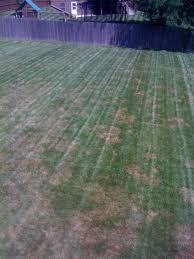 Brown Patch Disease Carys Corner Brown Patch Disease Alert Classic Lawns