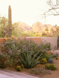 Small Picture Best 20 Desert gardening ideas on Pinterest Desert plants