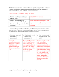 Activity 10 2 How Do C 3 C 4 And Cam Photosynthesis Compare