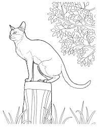 Gatticats 14 Disegni Da Colorare Per Adulti E Ragazzi Arianna