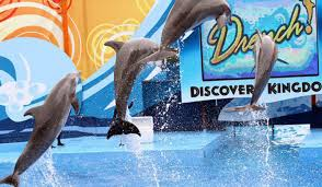 exposed six flags discovery kingdom theme park cruelty isn t  six flags discovery kingdom theme park cruelty isn t amusement one green planetone green planet