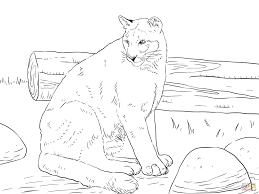 sitting cougar coloring page printable mountain lion coloring page