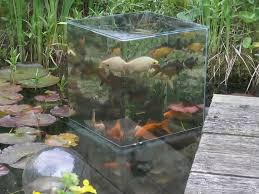 Fish Tank Youtuber Builds Above Water Fish Tank Business Insider