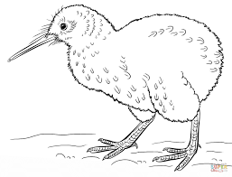 Small Picture Kiwi Bird coloring page Free Printable Coloring Pages
