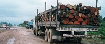 Resultado de imagen para tala de arboles en republica dominicana