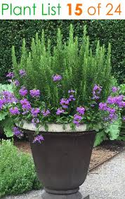 24 stunning container garden planting