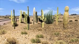 desert plants with names. Brilliant Plants Desert Plants Pack 1 For With Names E