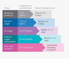 Idexx Progesterone Chart Oh Yeah You Blend Blog Archive 2 5