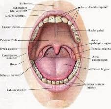 Основные биотопы полости рта и методы их исследования  Основные биотопы полости рта и методы их исследования ротовая жидкость