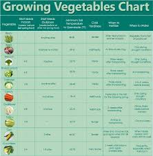 Vegetable Garden Planting Chart How To Grow Your Own Food For Increased Security Health