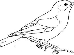 Bird Coloring Trustbanksurinamecom