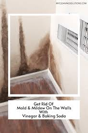 remove mold from walls with vinegar