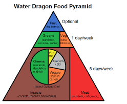 Bearded Dragon Nutrition Chart Water Dragon Food Pyramid Complete Critter