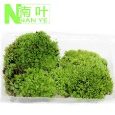 Decorative Moss Balls China Decorative Moss Balls China Decorative Moss Balls Shopping 51