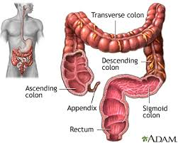 The small intestine is made up of three segments, which form a passage from your stomach (the opening between your stomach and small intestine is called the pylorus) to your large intestine: Large Intestine Colon Medlineplus Medical Encyclopedia Image