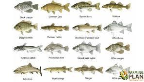 Saltwater Fish Chart Saltwater Fish Identification Of Saltwater Fish Farming Plan