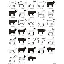 Animal Applique Designs 10 Animals Applique Designs Package