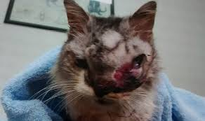animal abuse cats. Interesting Cats Abandoned Cat And Animal Abuse Cats E