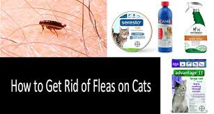 how to get rid of fleas on a cat photo