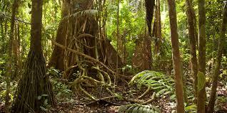 amazon rainforest. Contemporary Rainforest Amazon Jungle Documentary National Geographic On Rainforest YouTube