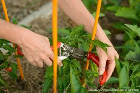 useful garden tools