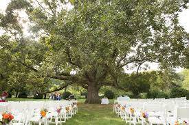 spring outside wedding decorations wedding ideas exceptional tree